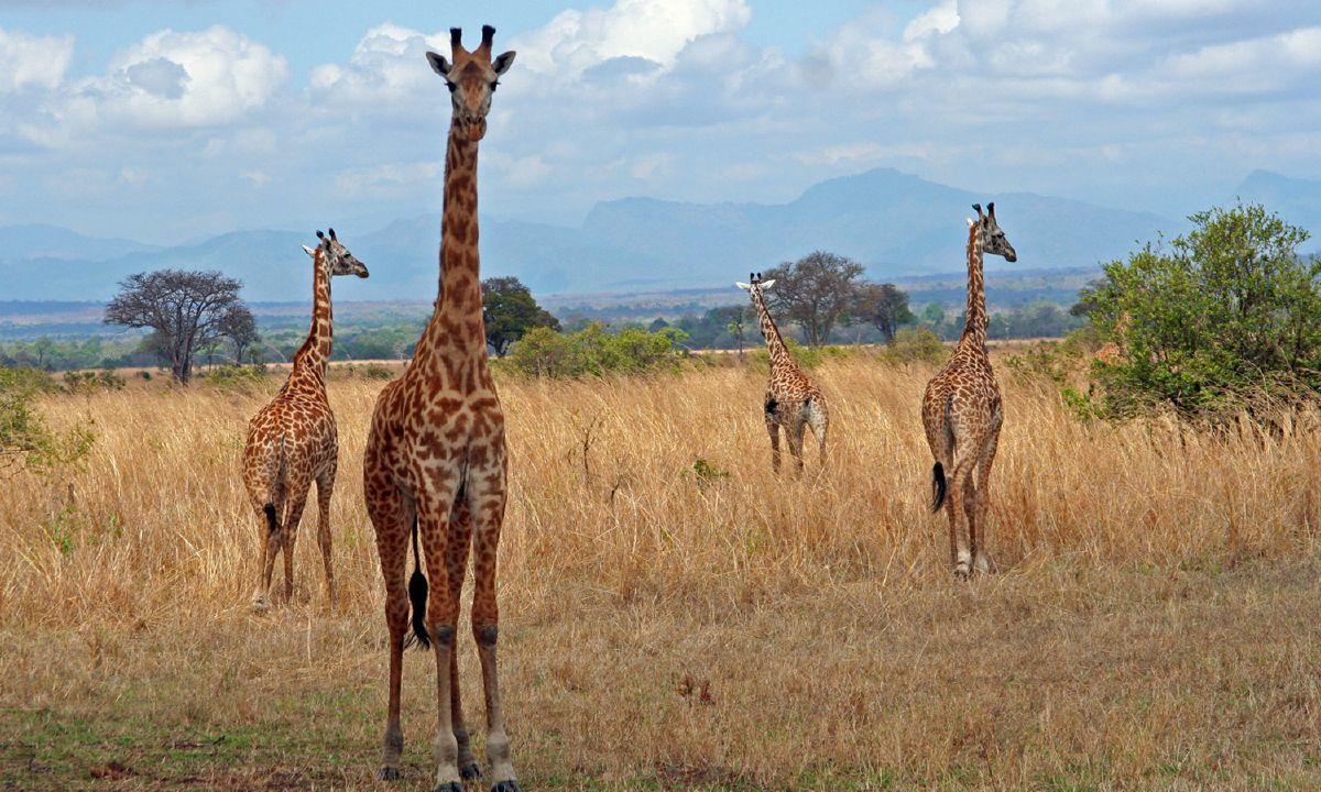 subequatorial climate in tanzania