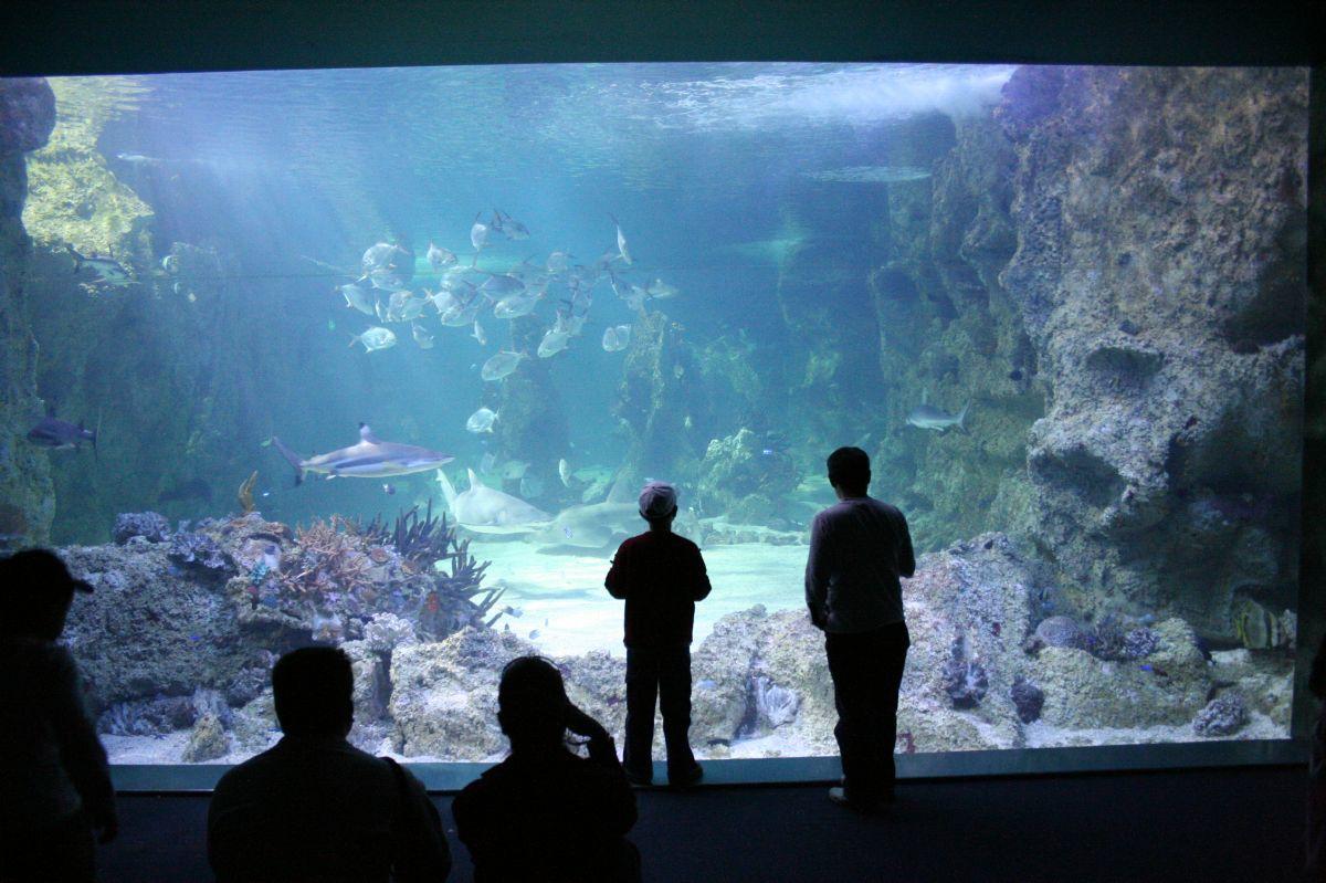 the sydney aquarium