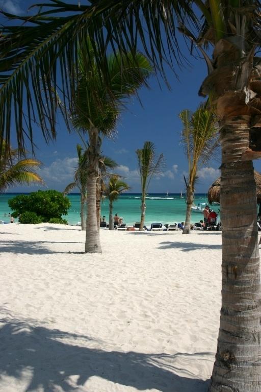 coco palms cancun