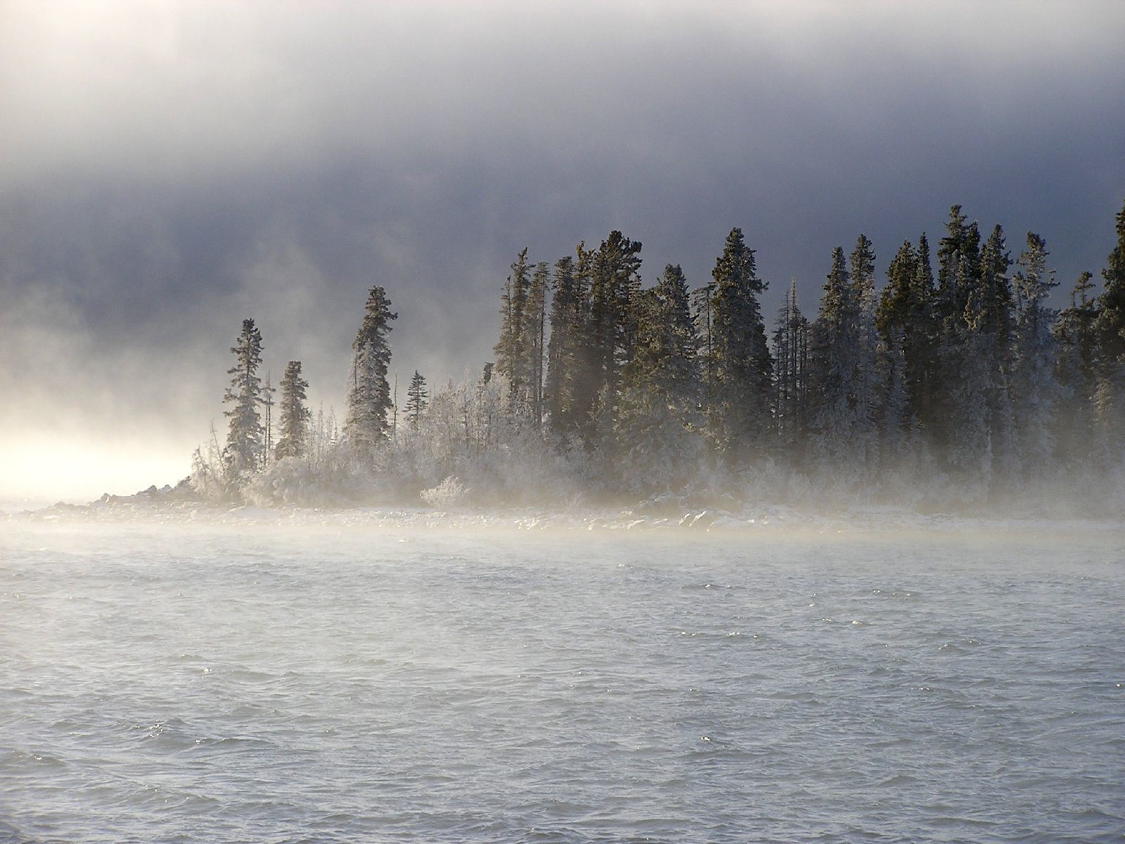 winter fog in canada pine forest