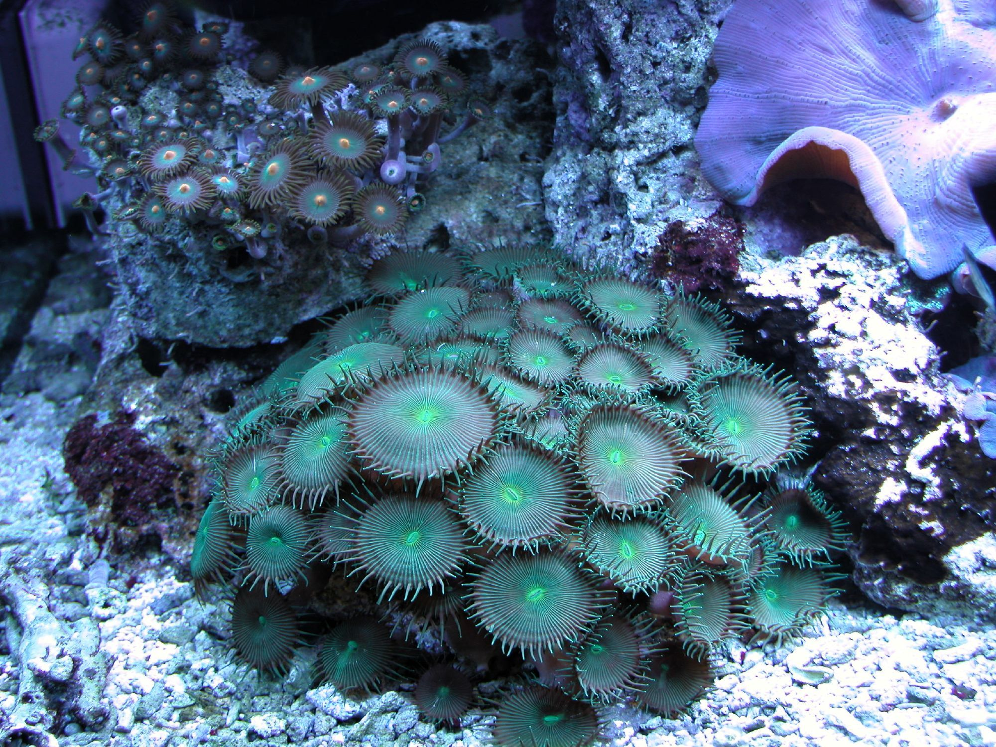 the diversity of corals is amazing