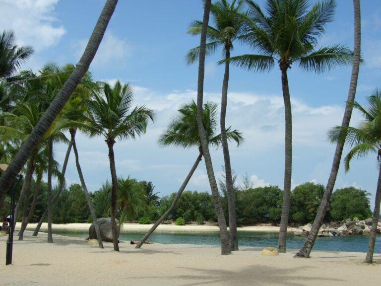 tropical paradise coco palms