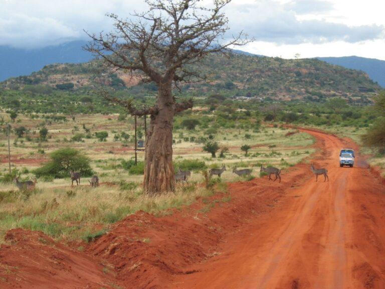 african savanna kenya