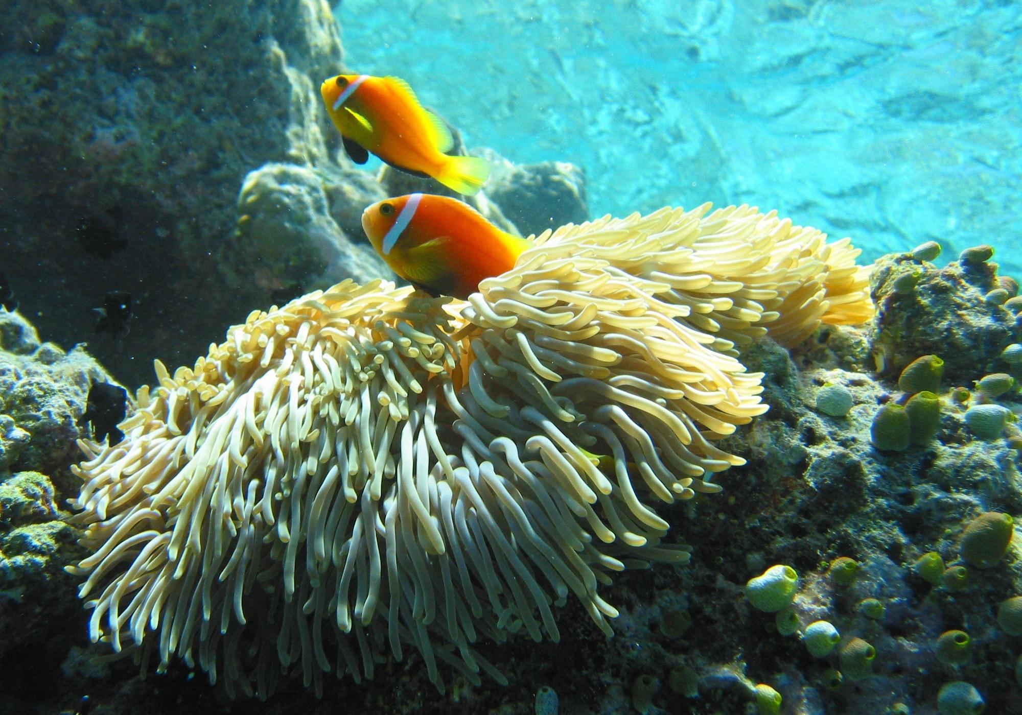 splendid coral reef of maldives