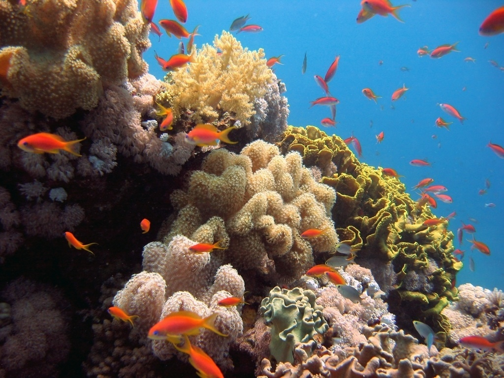 red sea diving sudan