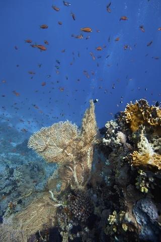 hurghada coral reef