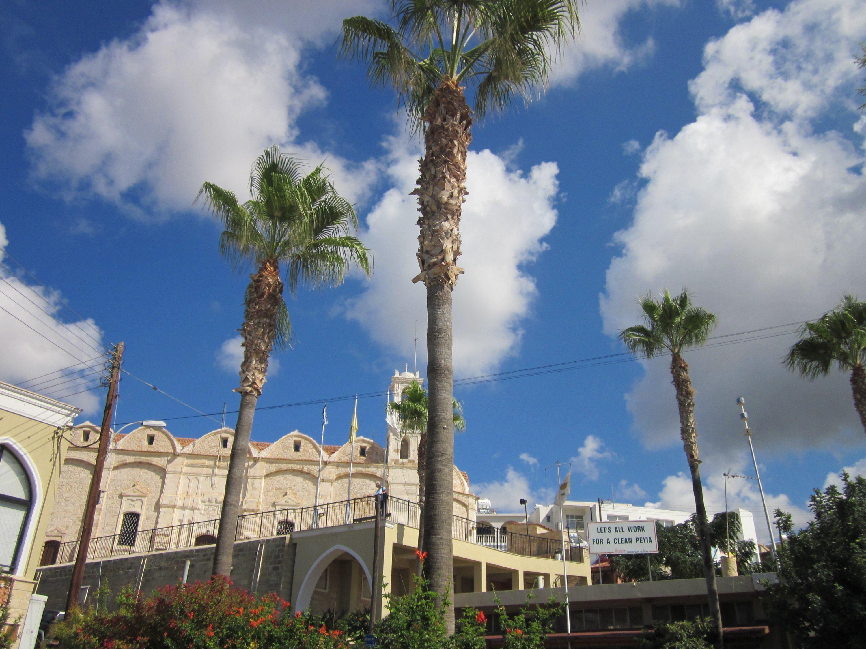 palm trees cyprus