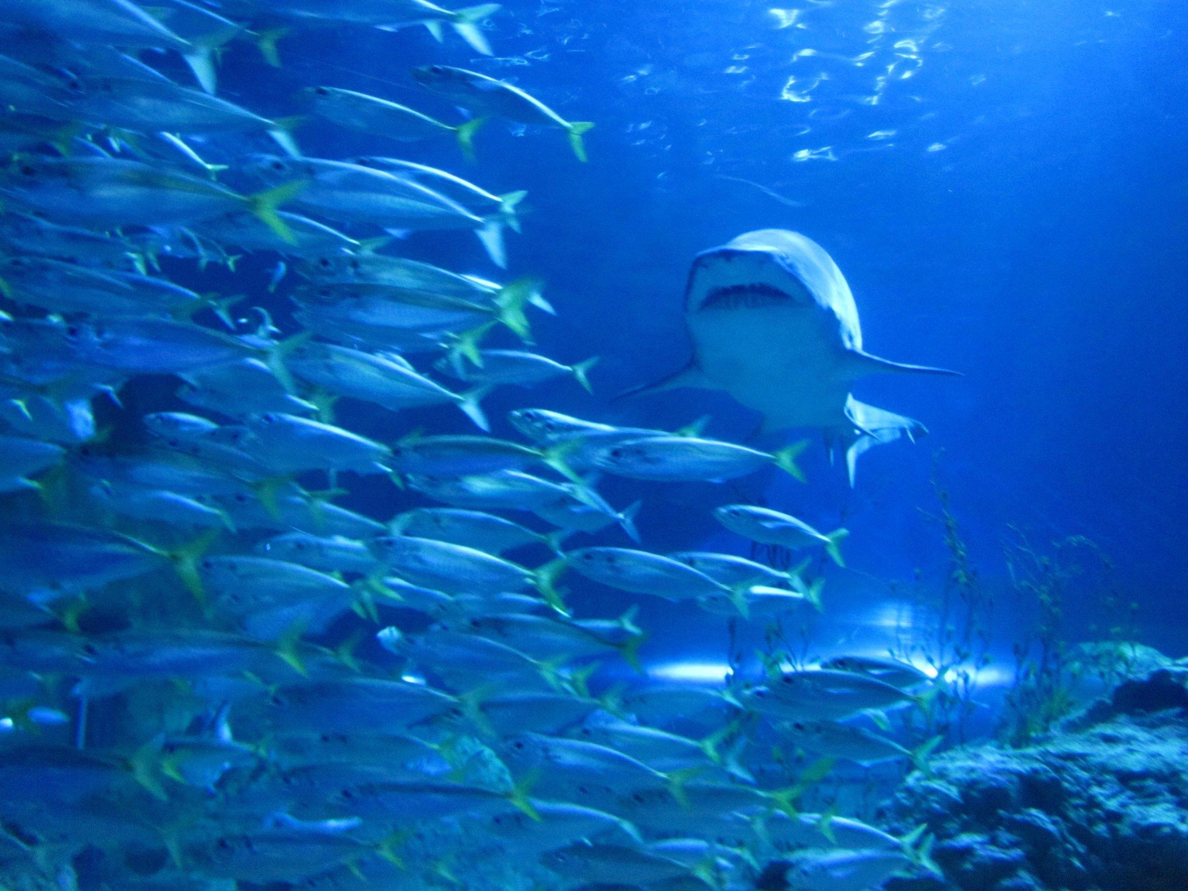 shark europe