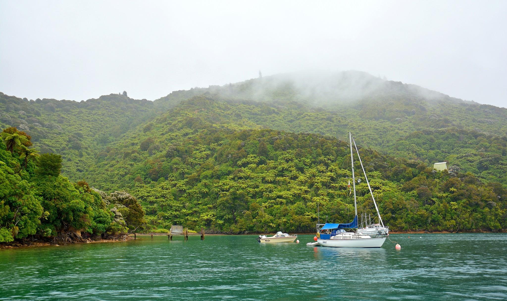 Coastal rainforest, New Zealand
