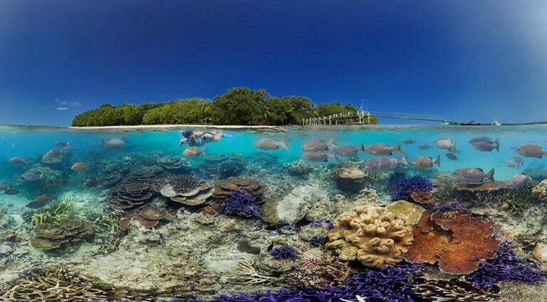 Private Island coral reef