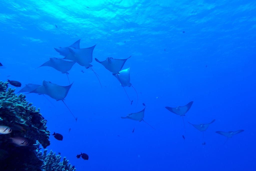 Diving in Saipan