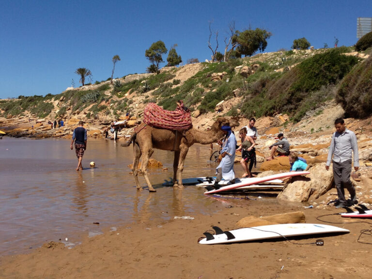 camel on the beach at taghazout