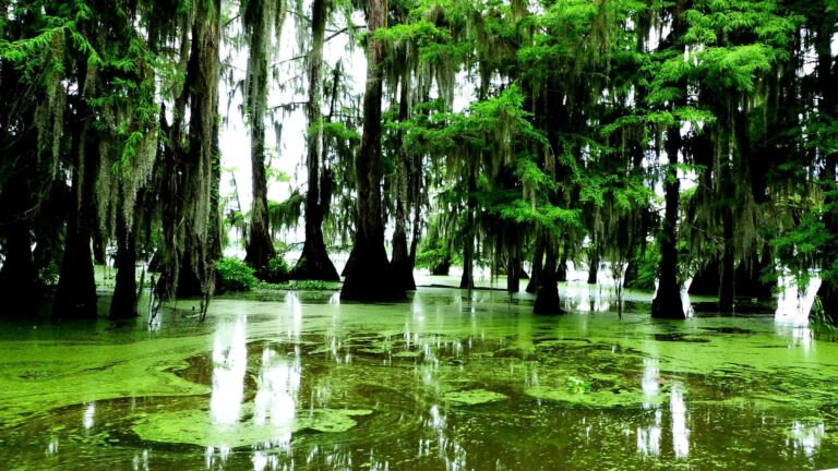 the bayous in the delta of mississippi